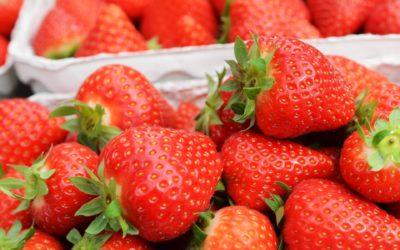 Endlich eigene Erdbeeren